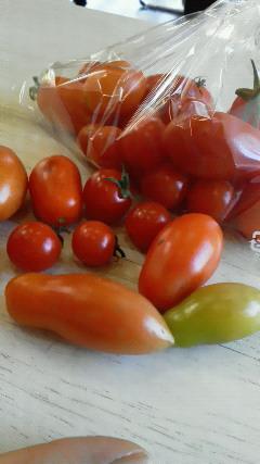 プチ&長トマト