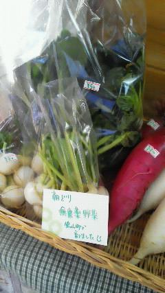 今日の野菜