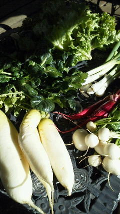 メリークリスマス野菜