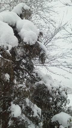 すごい雪になりました。